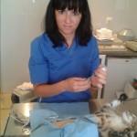 cirugias veterinarias, animales en cadiz