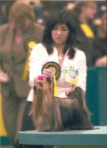 Campeón Belleza Crufts 2008 Inglaterra
