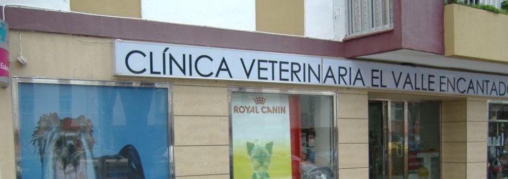 Criadora y Expositora de Yorkshire Terrier
